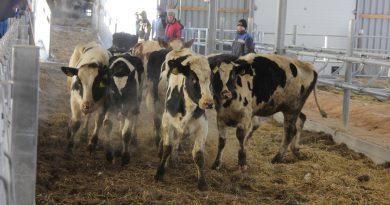 «Дамате» и Danone завершили первый этап комплектации молочного комплекса в селе Усть-Ламенка